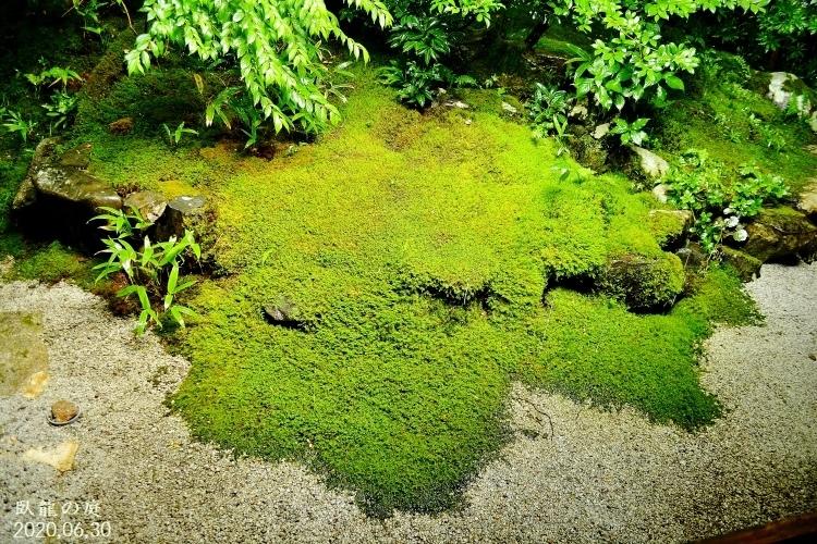 DSC_5596★瑠璃の庭★ (750x500) - コピー