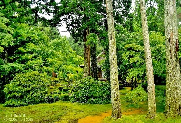 DSC_5655★三千院庭園 - コピー (750x511) - コピー