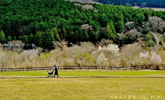 2021-04-03 131★箱根湿生花園 (700x424)