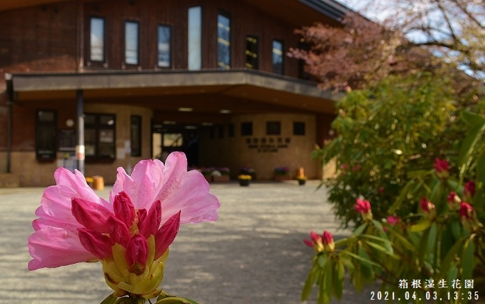 2021-04-03 197★箱根湿生花園★