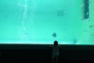水族館縮小