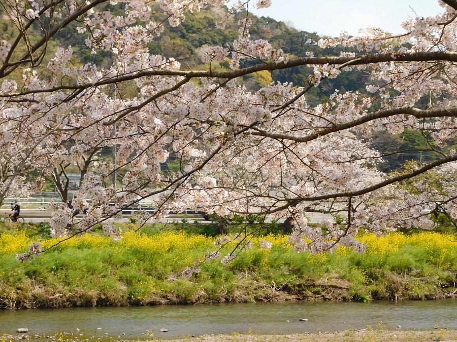 nakagawa-20210327-04.jpg
