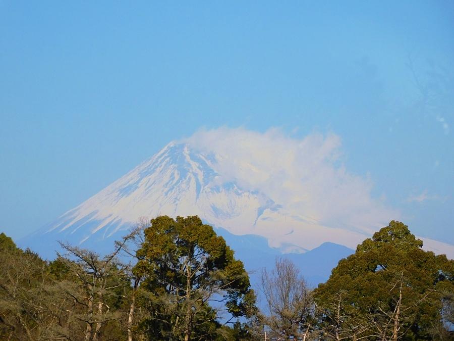 niji-20210207-02.jpg