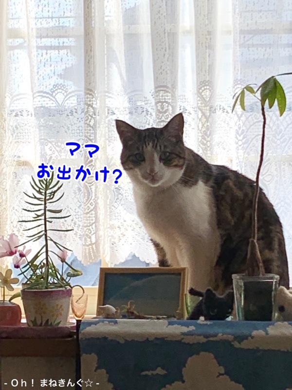 fc2blog_20200322170212e80.jpg