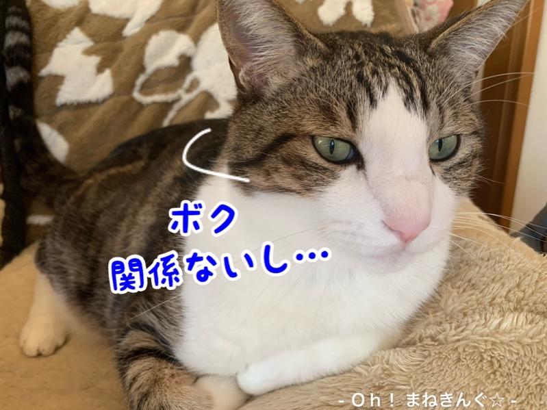 fc2blog_2020040220590394a.jpg