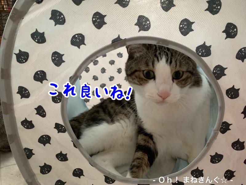 fc2blog_202005112217359cd.jpg