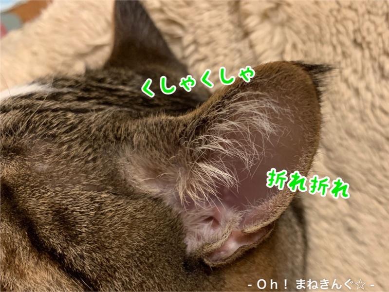 fc2blog_20200516220026a3f.jpg