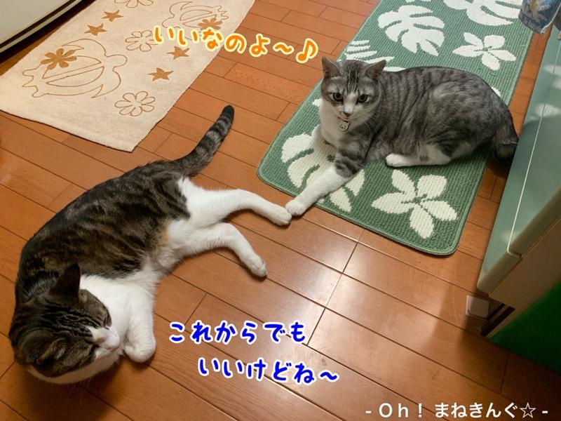 fc2blog_20200528221952af6.jpg