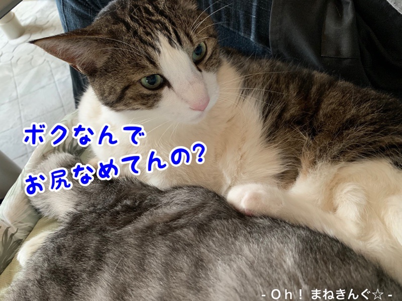 fc2blog_20200623152752f6f.jpg