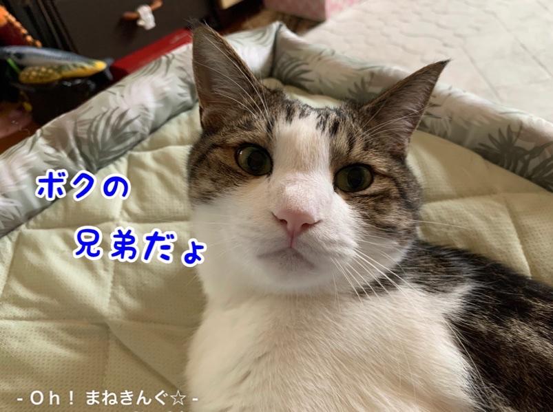 fc2blog_202007041504278e4.jpg