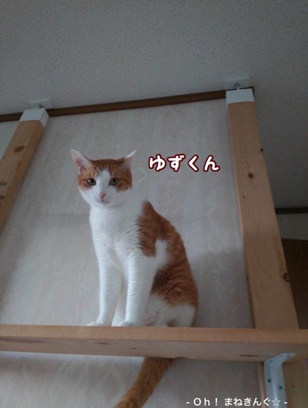 fc2blog_20200704212123402.jpg
