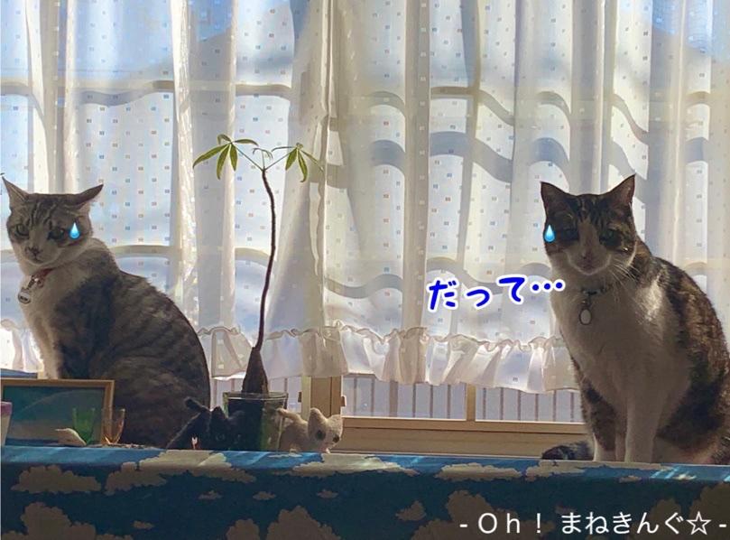 fc2blog_2021012113480094c.jpg