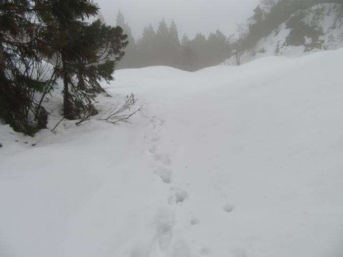 当てのない雪道