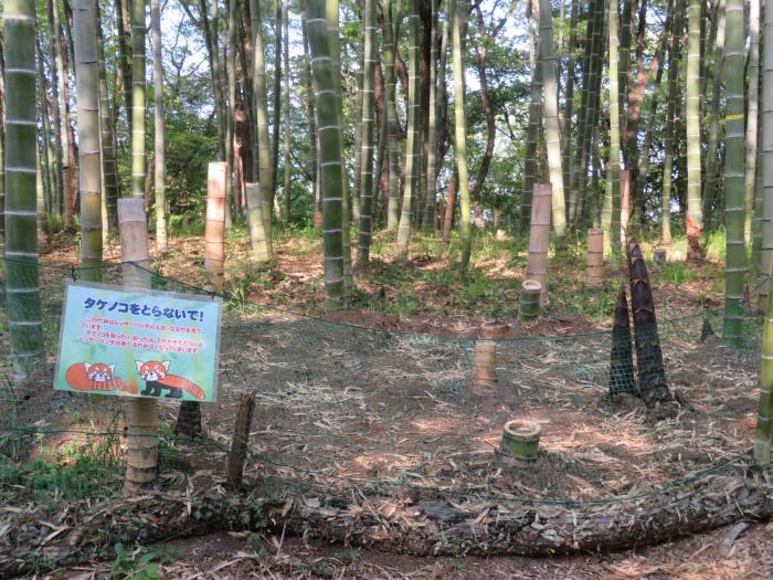 レッサーパンダ用竹藪
