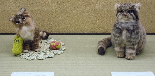 159「見つめる猫」「マヌルネコ」Doll Forest MOMO