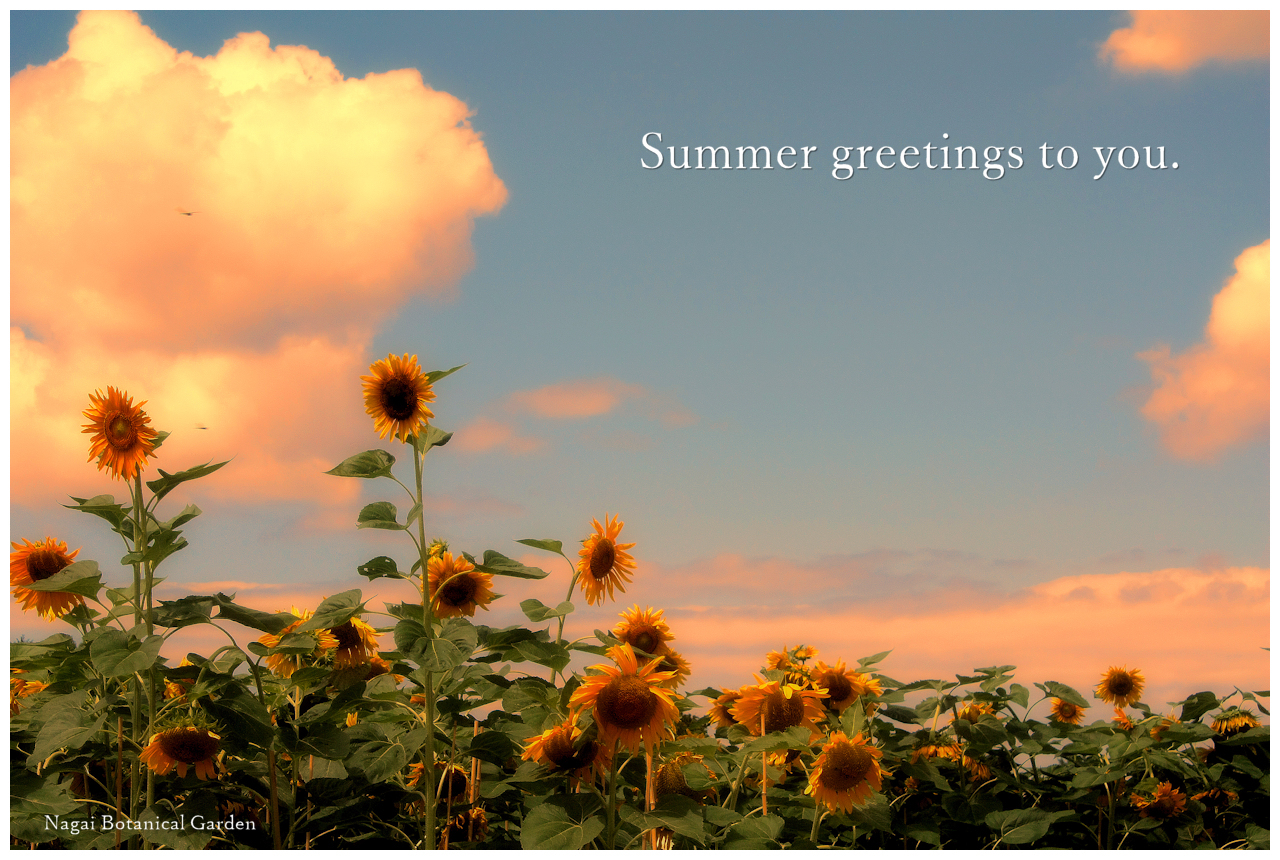 Summer greetings to You.