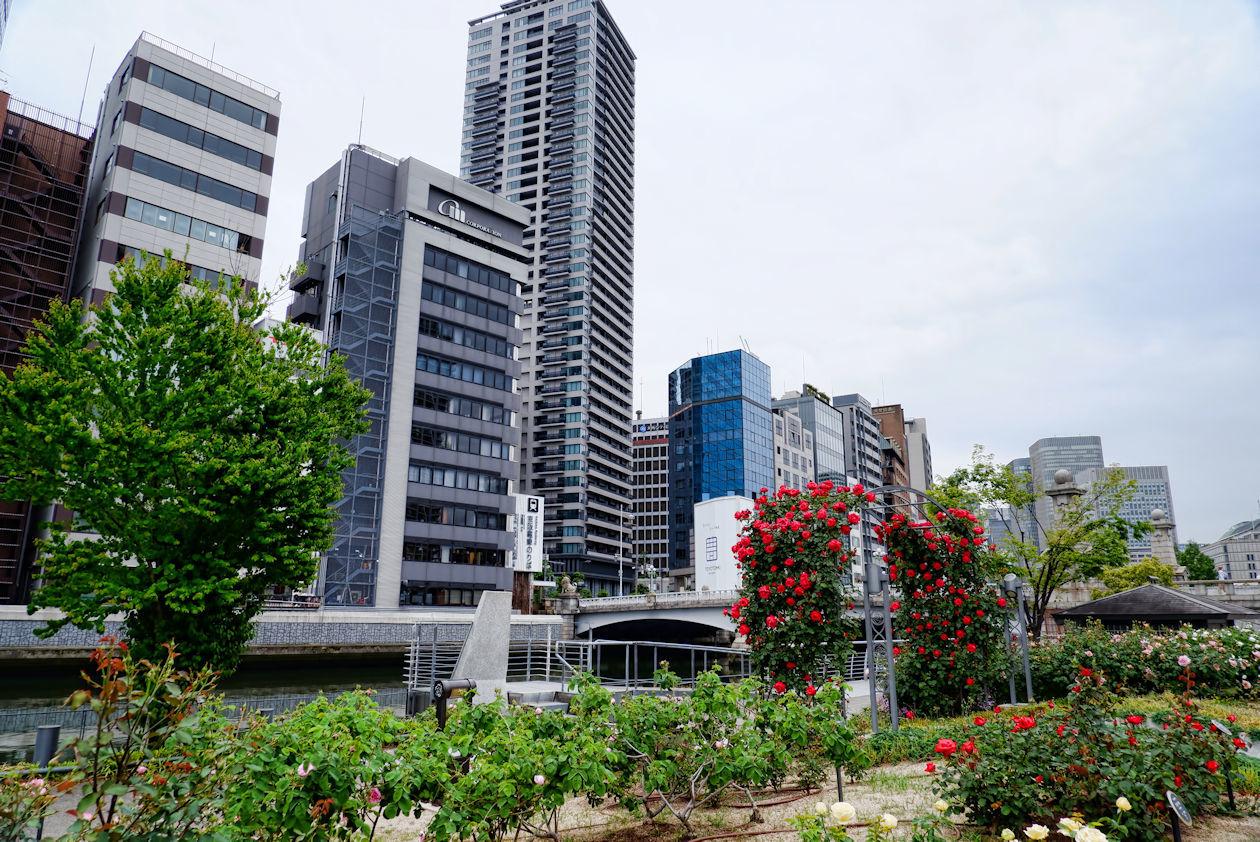 中之島バラ園 Nakanoshima Rose Garden