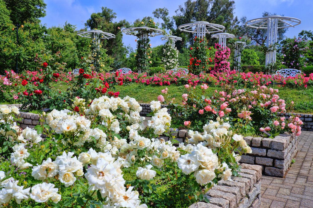 Nagai Botanical Garden: Rose Garden