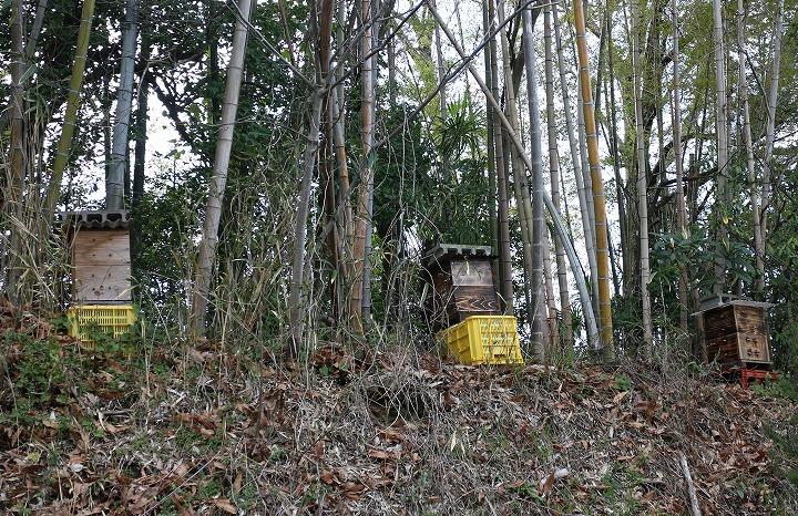 河津桜の近くに在る小さな家みたいなの 2 3 17