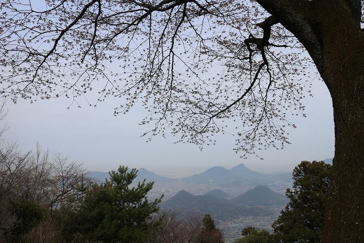 見下ろす天涯桜 高瀬方面 2 3 26