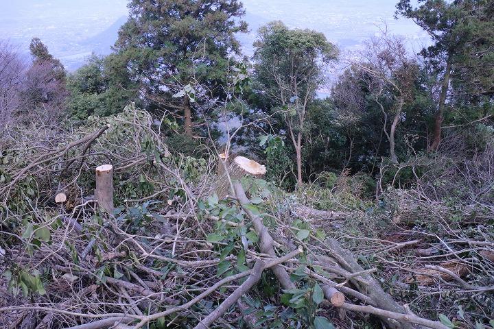 木を伐って見晴らしを確保 2 3 26