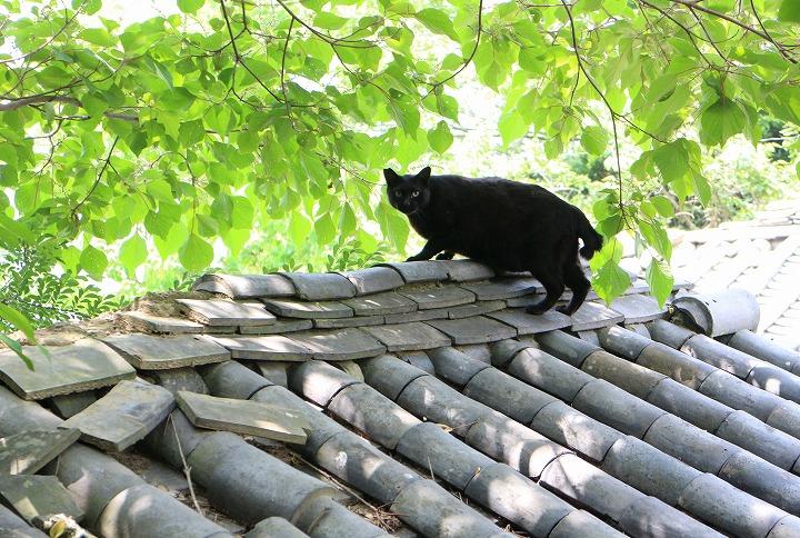 志々島の黒猫 2 6 3