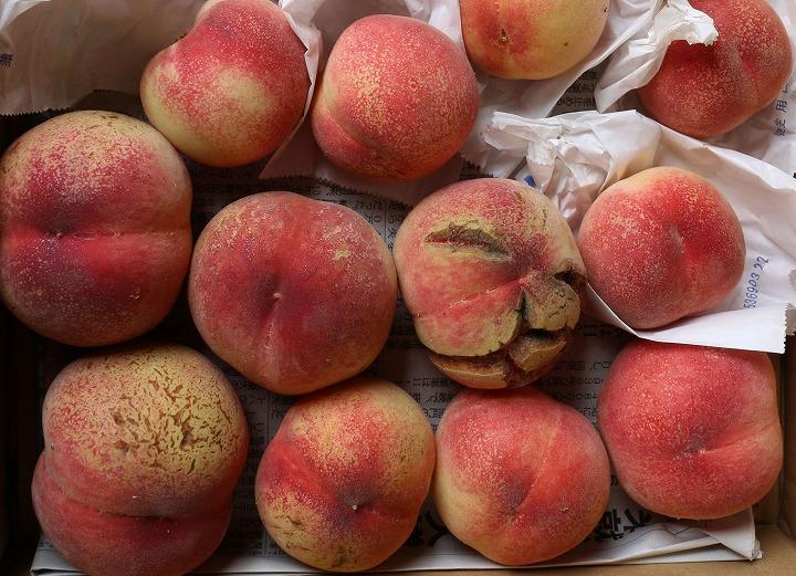 実家の桃の木に実がなる 2 7 4