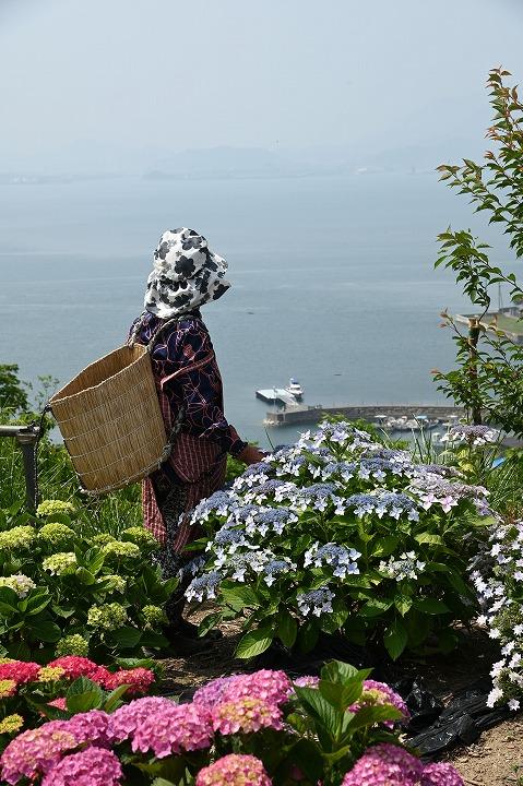 志々島の花畑から港を見下ろす 2 6 4