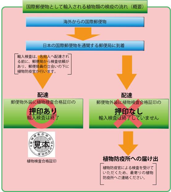 植物検査合格証印