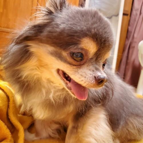 私に似てしぶとい犬 でもかわーいーいーver