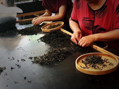 2020岩茶選別