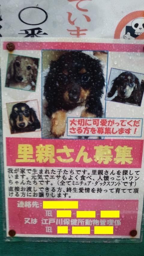 江戸川区平井:ミニチュアダックス多頭飼育崩壊:飼い主との2年間の記録