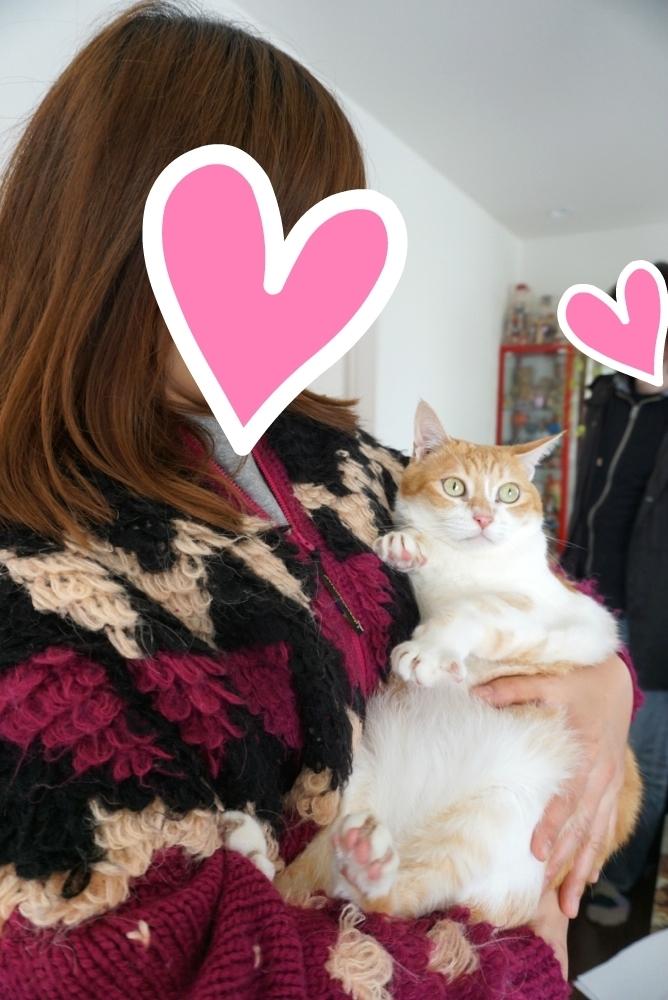 🎊飼い主さんが自殺して残された猫:かず&ピクシーくん