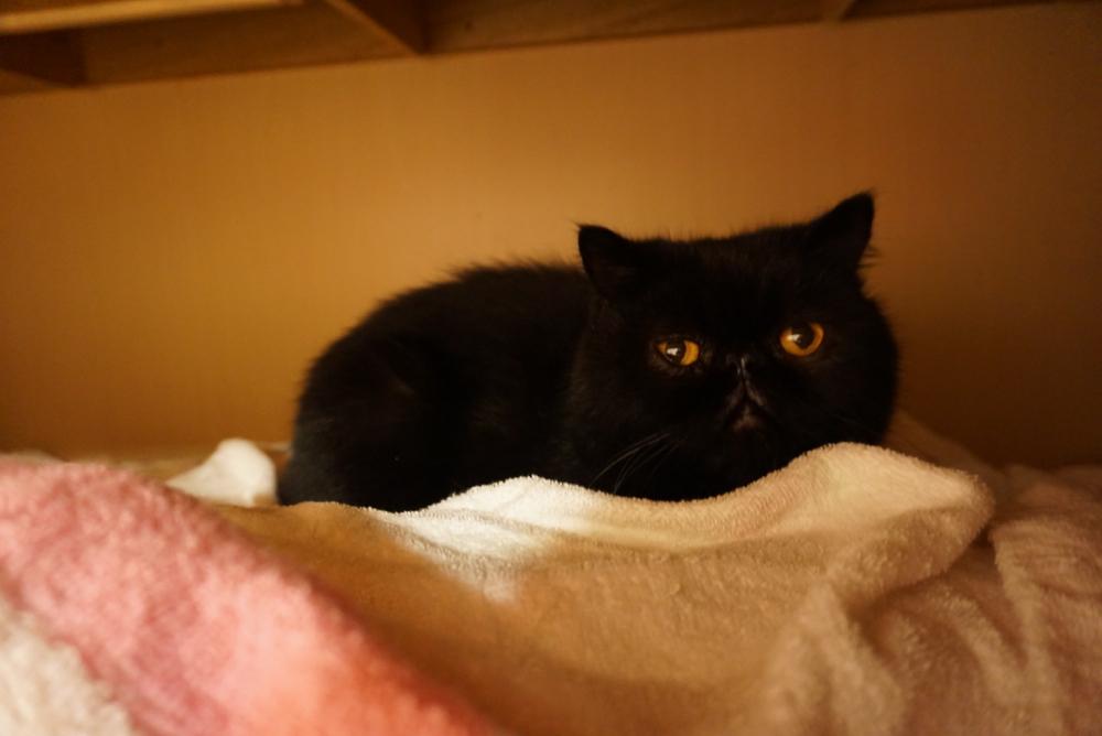 飼い主さんが自殺して残された猫:かず&ピクシーくん