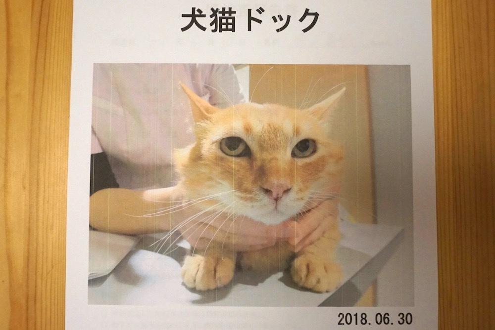 茶飯くん:猫ドックを受けました