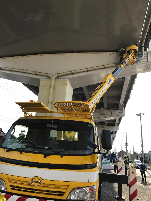 首都高速の橋脚から猫ちゃんをレスキューしました❗️