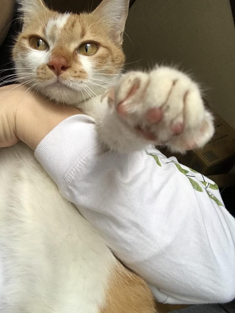 🎊茶白猫ちゃん:シナモンちゃんになりました♪