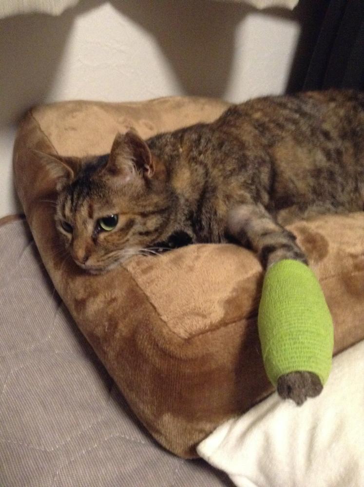交通事故にあい骨折した、まきまきちゃん:包帯が変わりました