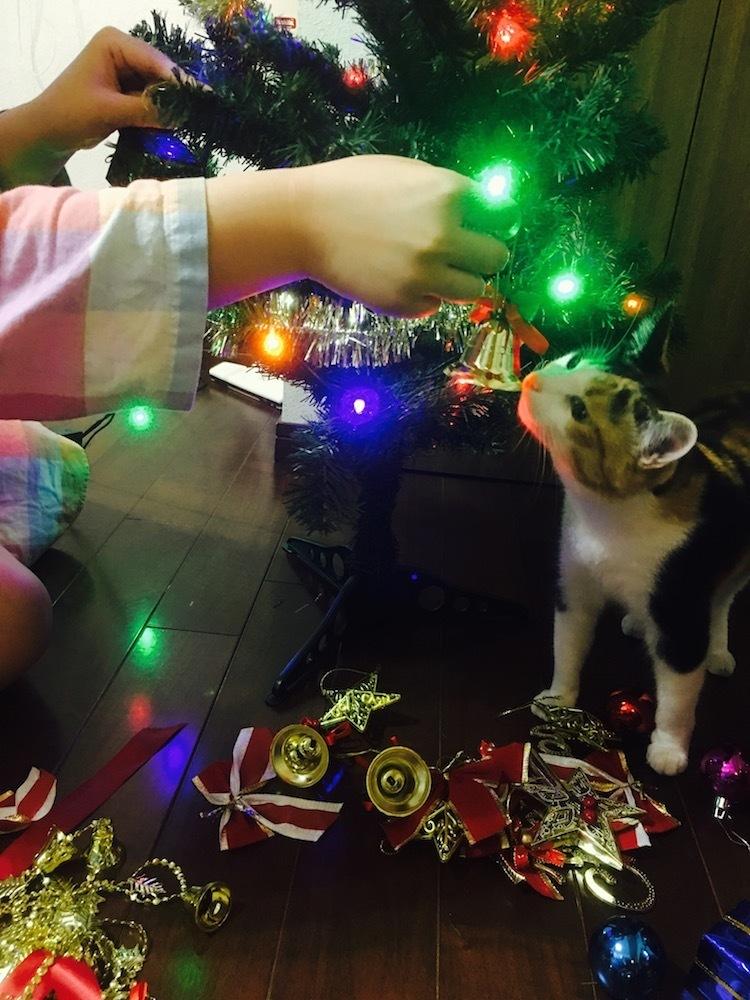 📩三毛天使ちゃんからのメリークリスマス!