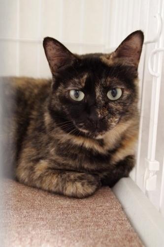 生後9ヶ月くらいのサビ猫