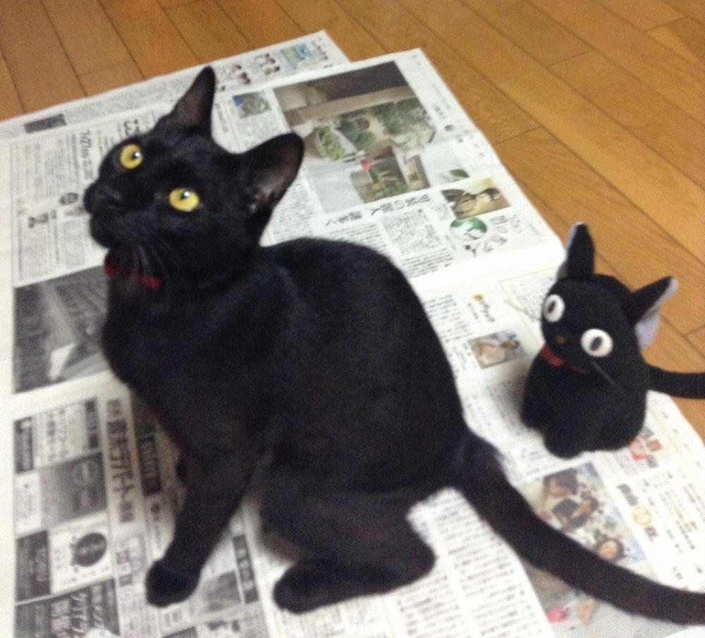 赤いリボンが良く似合う♪黒猫くまちゃん
