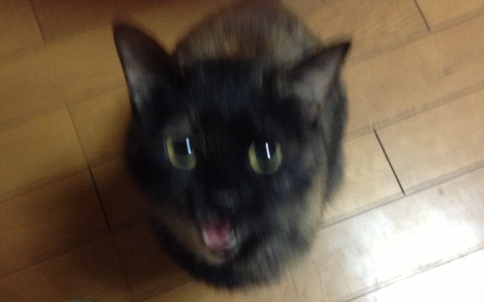 サビ猫ベルちゃん