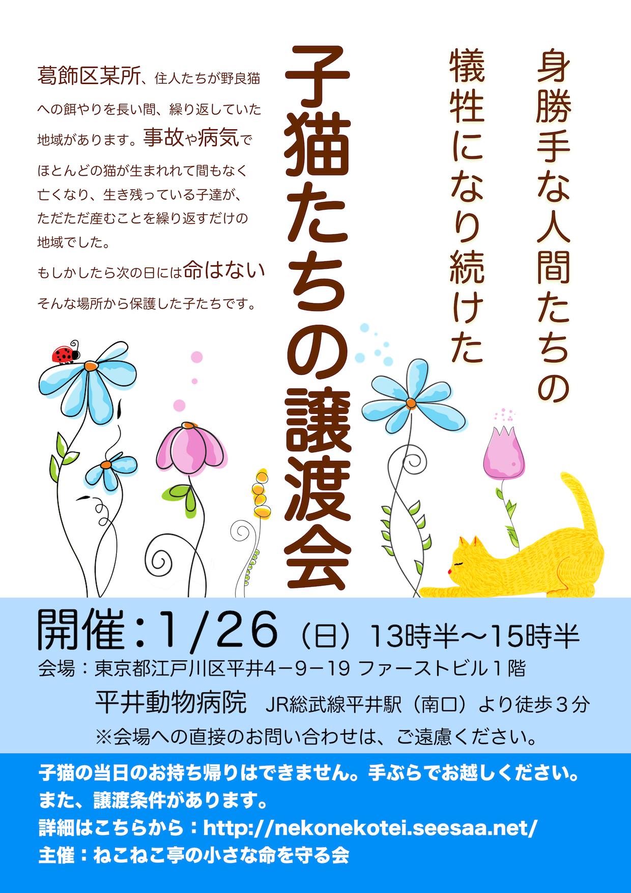 1/26開催:子猫たちの譲渡会:結果報告