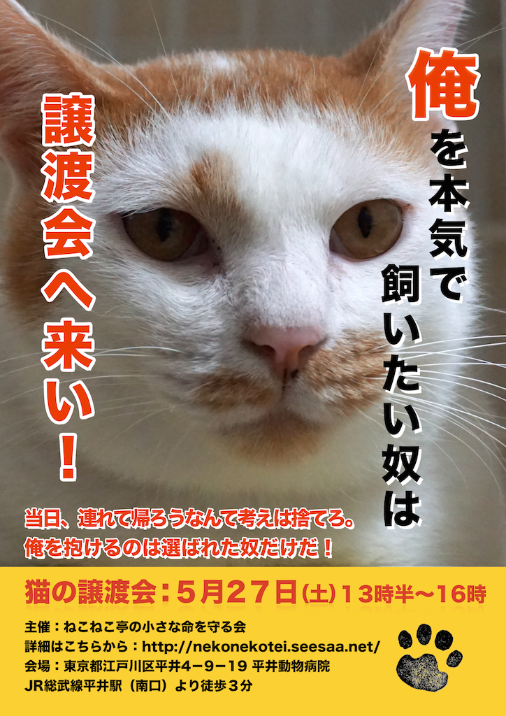 5/27開催:多頭飼育崩壊した猫たちの譲渡会:結果報告