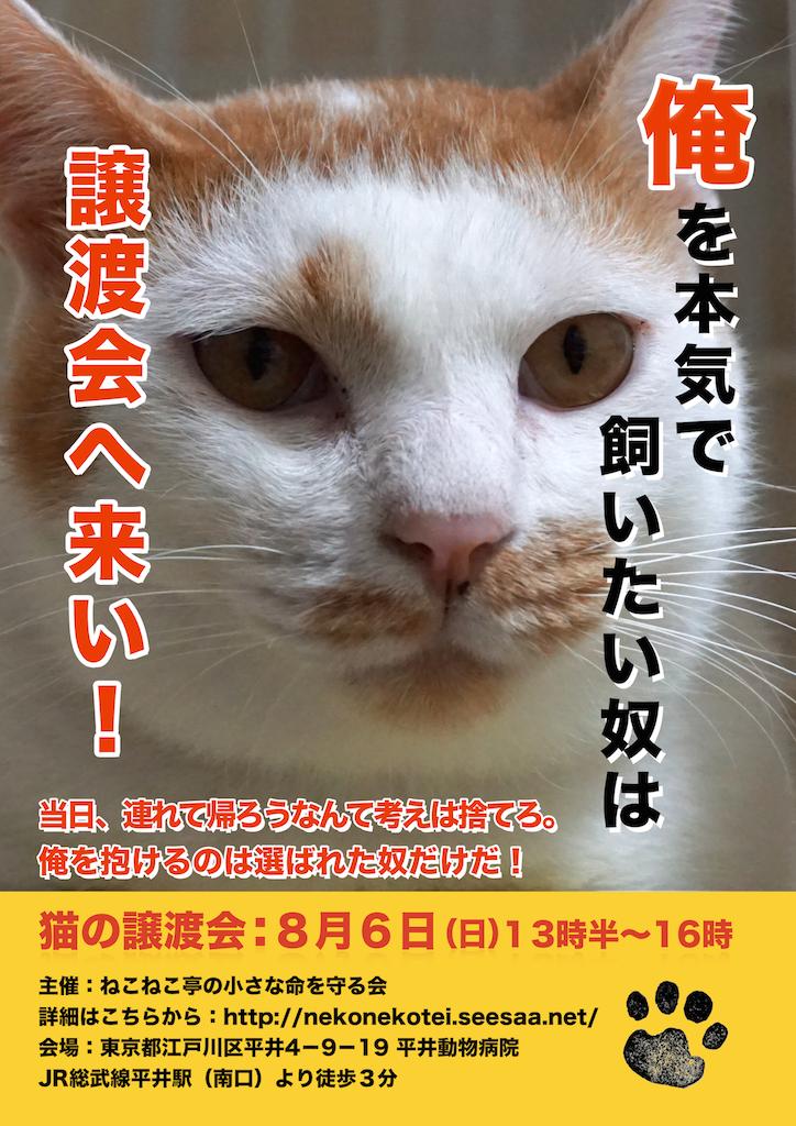 8/6開催:多頭飼育崩壊した猫たちの譲渡会:結果報告