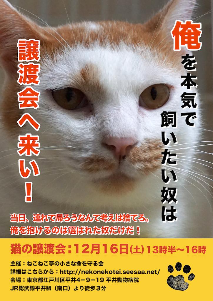 12/16:多頭飼育崩壊した猫たちの譲渡会:結果報告