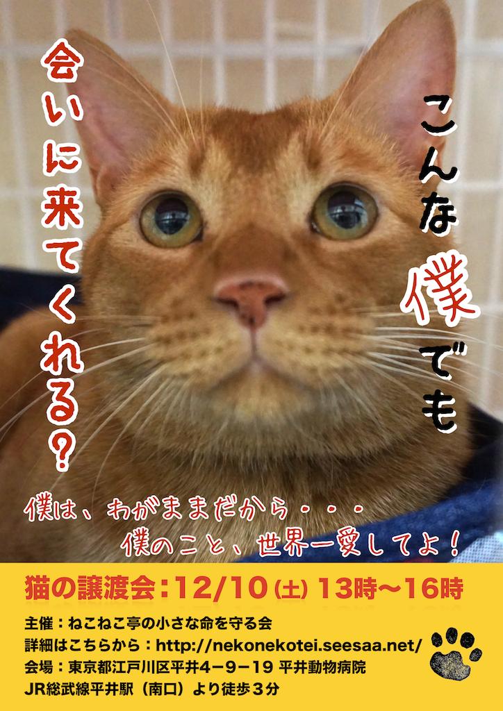 12/10開催:多頭飼育崩壊した猫たちの譲渡会:結果報告