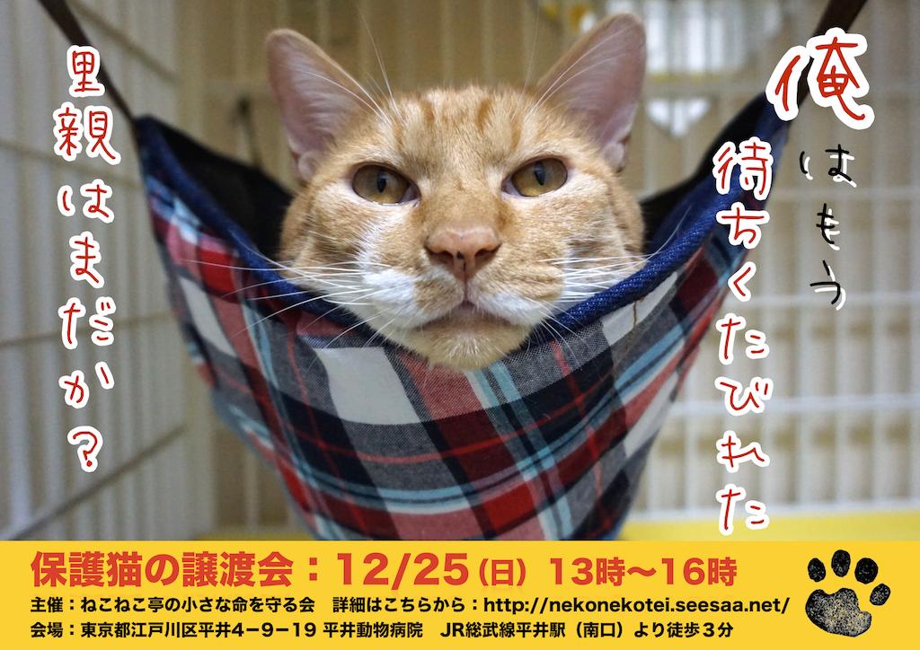 12/25開催:多頭飼育崩壊した猫たちの譲渡会:結果報告