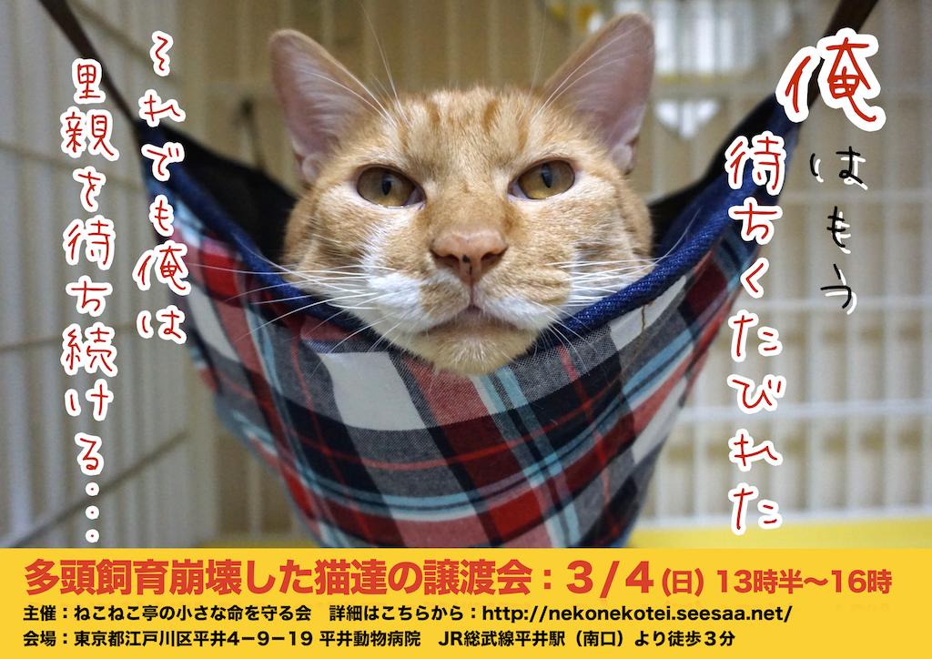 3/4開催:多頭飼育崩壊した猫たちの譲渡会:結果報告