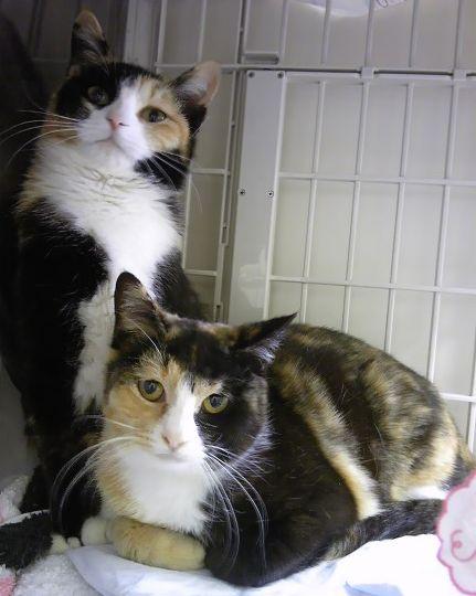 🎊三毛猫姉妹